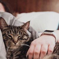 Cómo registrar el sueño con tu iPhone y el Apple Watch