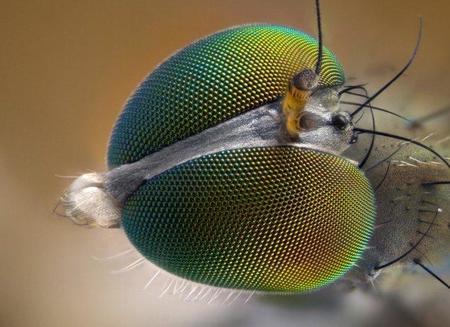 Microfotografía extrema. 29 fotos para inspirarte