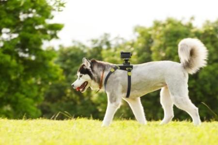 La Action Cam de Sony ya se la puedes poner hasta al perro