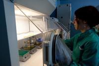 Inaguración del Instituto de Investigación en Ciencias de la Alimentación