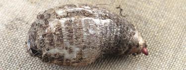 Qué es la malanga o taro y cómo utilizar este tubérculo en la cocina