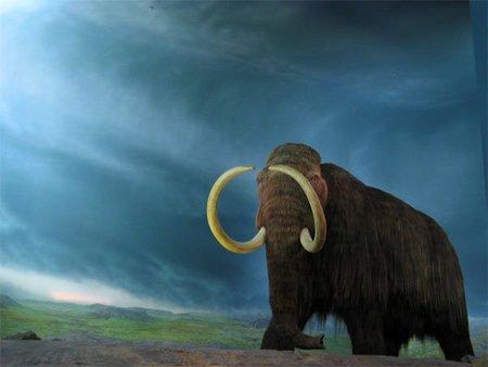 En 5 años podríamos tener mamuts de nuevo en la Tierra
