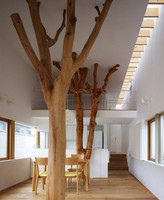 Árboles dentro de casa, una idea espectacular