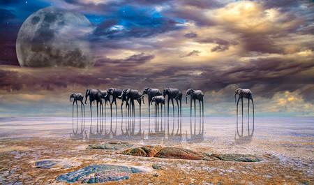 Estas son las mejores fotografías del continente africano según el nuevo certamen Africa Photo Awards 2019
