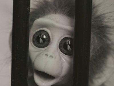 La crueldad de los experimentos en animales en un devastador corto lleno de amor y sueños