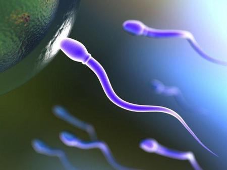 Una alteración en la proteína del semen, clave en los casos de infertilidad