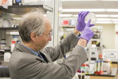Sintetizado Por Primera Vez Un Cromosoma Eucariota De Diseno Image 380