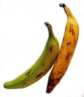 Recetario de preparaciones a base de plátano para descargar