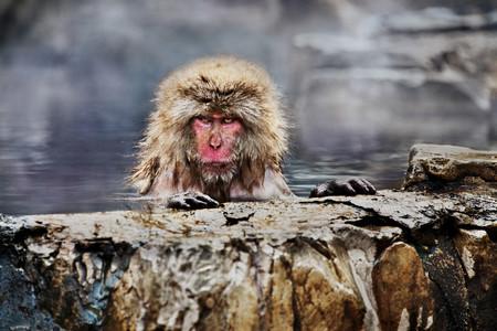 'Animals', el fotolibro donde Steve McCurry nos presenta sus imágenes favoritas de animales de todo el mundo