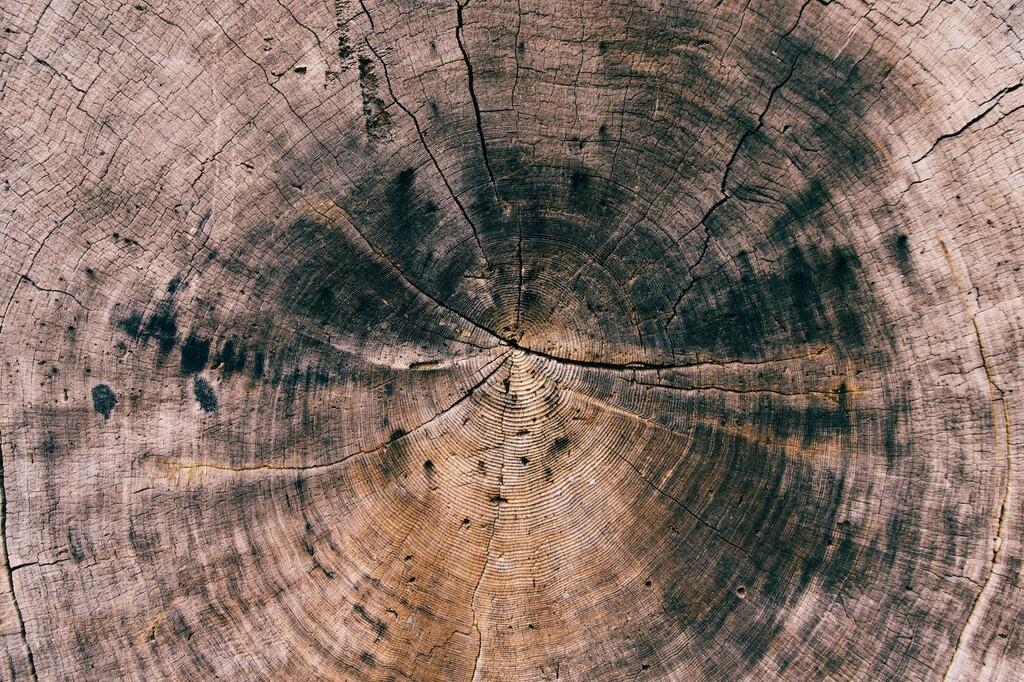 El eco de las supernovas: encuentran en los anillos de los árboles el rastro de explosiones a miles de años luz