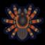 Nh Icon Tarantula