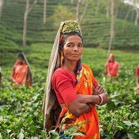 Agricultura ecológica o agricultura sostenible, ¿cuál elegimos?