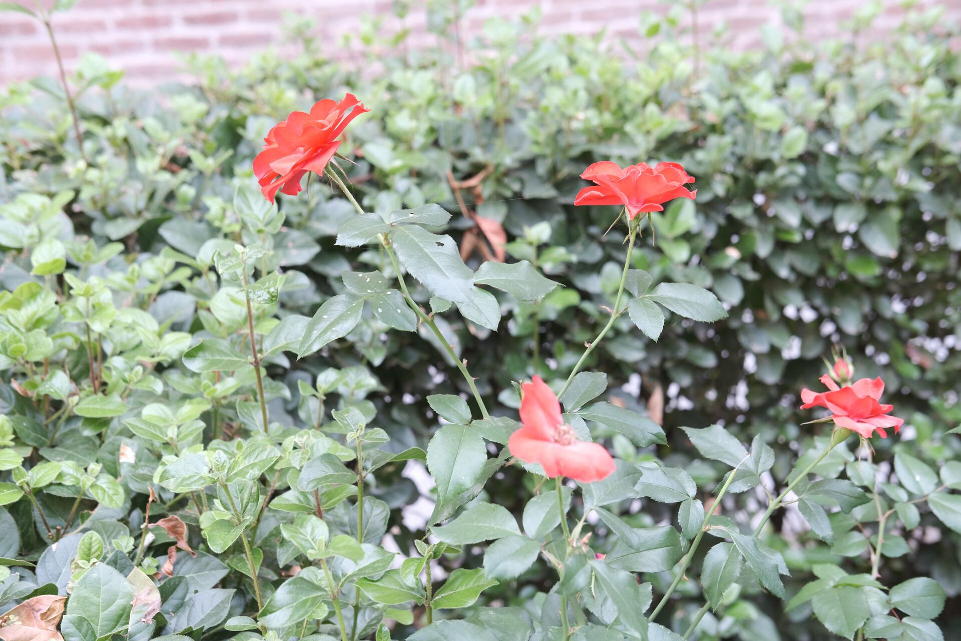 Foto de Fujifilm X-S10 (21/23)