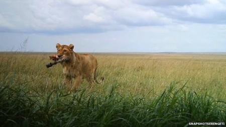 ¿Qué hacen los animales cuando no los vemos? 225 cámaras en el Serengueti nos lo cuentan