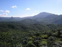 Preservar la biodiversidad en las plantaciones de aceite de palma
