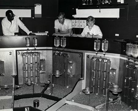 El experimento que comenzó con 8 ratones en 6,5 m2 y acabó en una masacre de cientos de ellos muertos