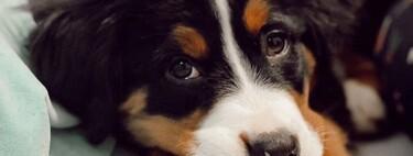 Cinco trucos de pro para que tu perro no lo pase mal ni la líe cuando le dejas solo en casa