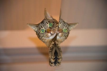 Los gatos adoran relacionarse con los seres humanos