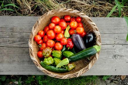 Beneficios Jitomate Tomate Rojo Digestivo Laxante Desinflamatorio Antioxidantes Saludable Nutricion Agricultura