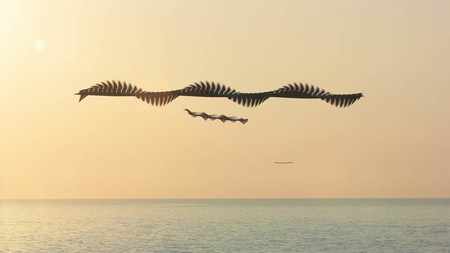 Ornitography Xavi Bou 4