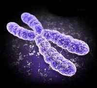 El par de cromosomas que nadie contó
