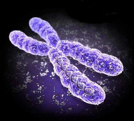 El Par De Cromosomas Que Nadie Conto