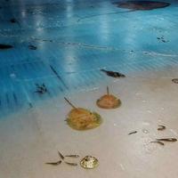 Japón se ha indignado con esta pista de hielo en la que podías patinar sobre 5.000 peces muertos