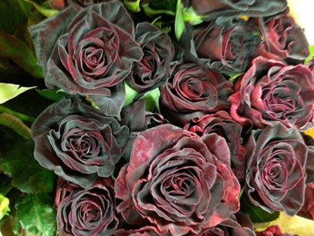 Halfeti Roses