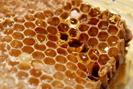 Propóleo, un antibiótico fabricado por las abejas