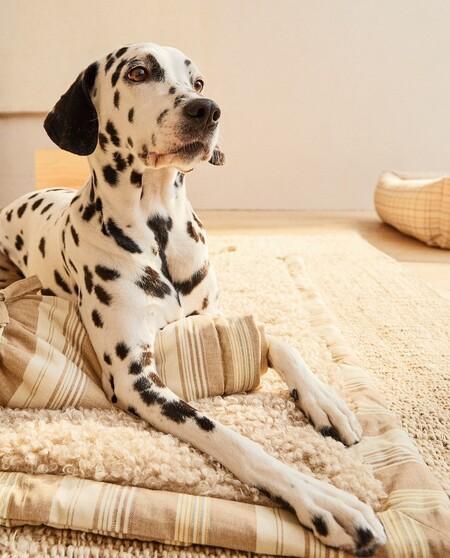 Zara Home Mascotas 4