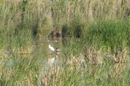 El brazo Este del Bajo Guadalquivir, despensa de Doñana y espectacular zona de avistamiento de aves