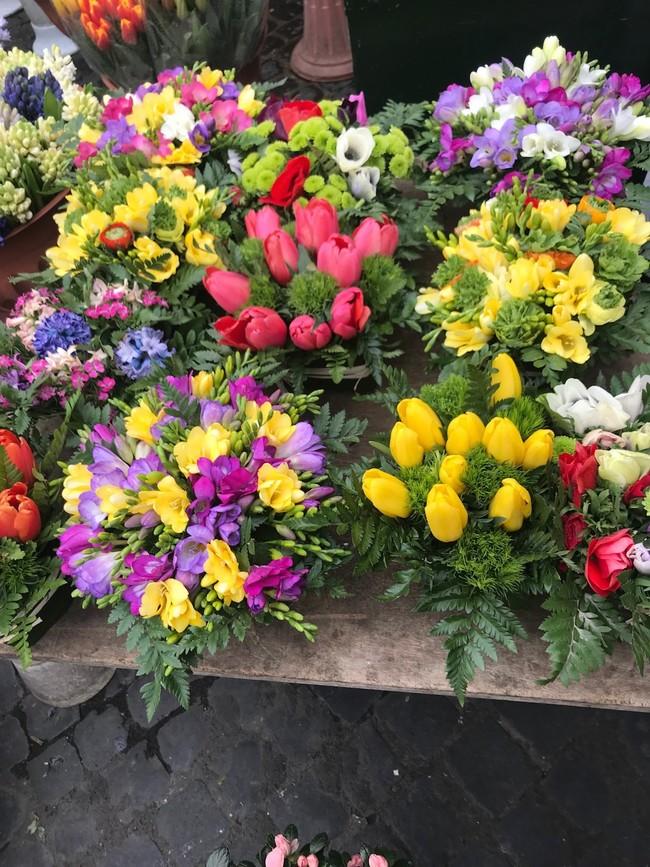 Flores Maria Luisa Sorando