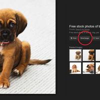 """Revive el botón de """"ver imagen"""" en Google Imágenes con estas extensiones"""